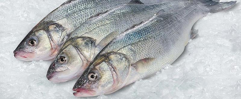 VITÓRIA! SinHoRes Osasco – Alphaville e Região, FHORESP e CNTur obtém parcelamento da dívida dos impostos de pescados